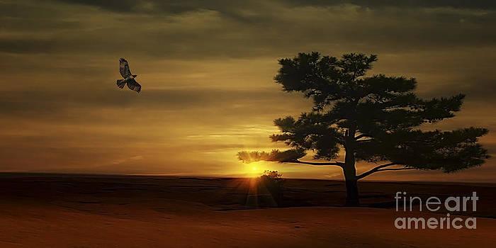 Desert Hawk by Tom York Images