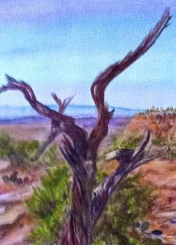 Desert in Sadona by Carol Warner