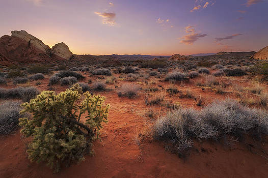 Desert Luminosity by Chad Ward