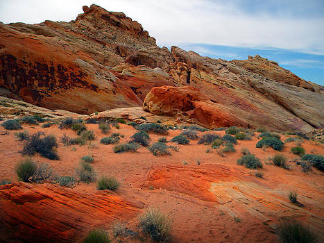 Frank Wilson - Desert Majesty