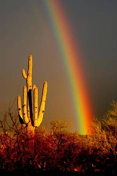 Desert Rainbow by T C Brown