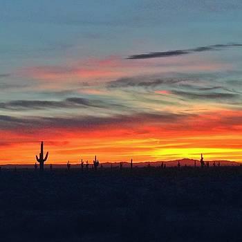 Desert Sunrise by Caroline Lomeli