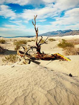 Desert Tree by Alan Socolik