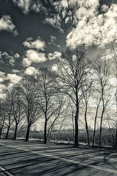Detail of Winter Trees Along a City Road. Black and White by Francesco Rizzato