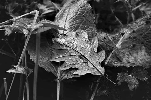 Dew drops by Kim Fry