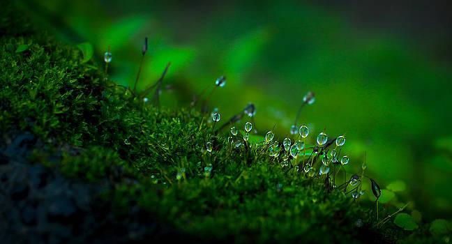 Dew Drops by Namit Narlawar