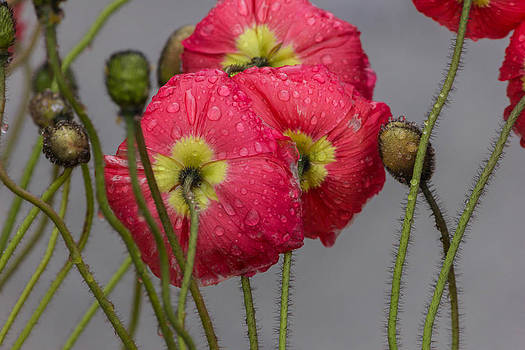 Dew on the flowers. by Timothy Latta