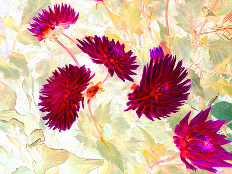 Dhalias by Louise Grant