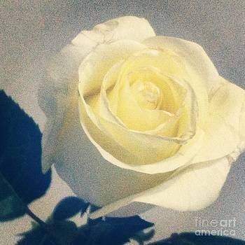 Digital Rose by Birdie Garcia
