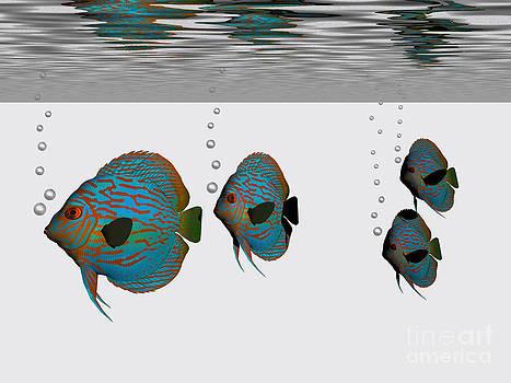 Corey Ford - Discus Fish