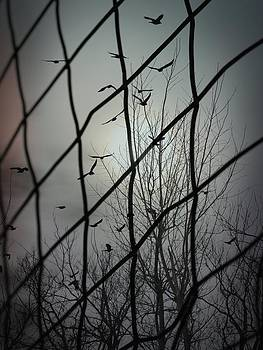 Gothicolors Donna Snyder - Distant Blackbirds