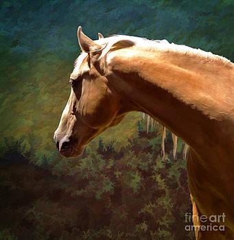 Distant Dreamer by Melinda Hughes-Berland