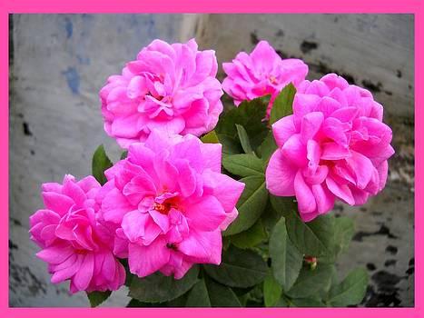 Divine-Roses by Basant Soni