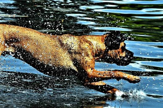 Diving Dog by Don Mann