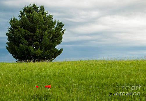 Do You See the Poppies? by Brenda Leitow