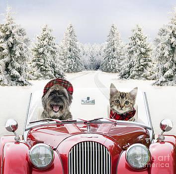 John Daniels and Johan De Meester - Dog And Cat Driving Car Through Snow