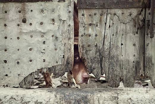 Mythja  Photography - Dog behind door