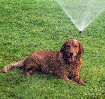 Dog days of summer by Tammy Espino