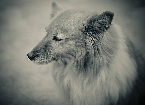 Lonely Dog by Pro Shutterblade