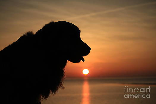 Doggy Sunset by Miso Jovicic