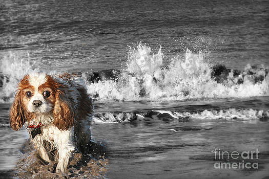 Dogs enjoying the sea by Jo Collins