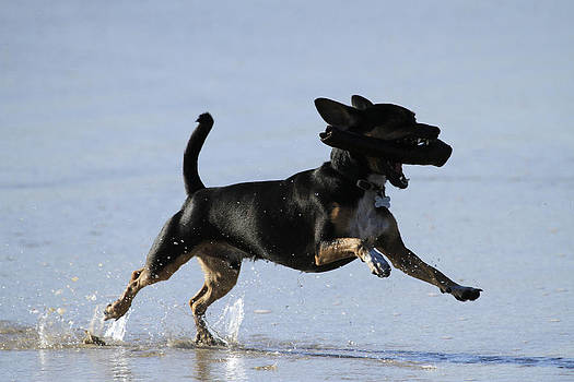 Noel Elliot - Dogs Just Wanna Have Fun