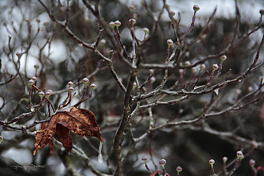 Dogwood in Winter by Karen Casey-Smith
