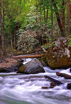 Dogwood Stream by David  Forster
