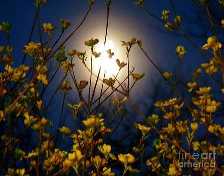 Judy Via-Wolff - Dogwoods and Moonlight