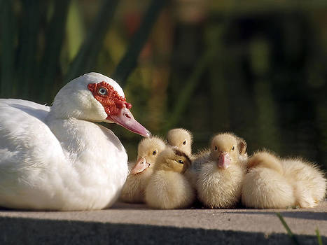 Donalds Family by Meir Ezrachi