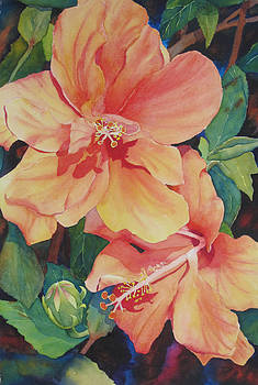 Double Hibiscus by Judy Mercer