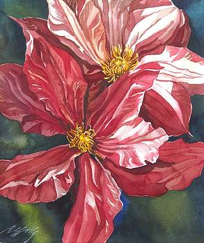 Alfred Ng - double red clematis