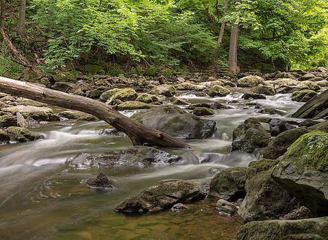 Downstream by Cindy Haggerty
