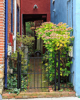 Downtown Garden Path by Jennifer Casey