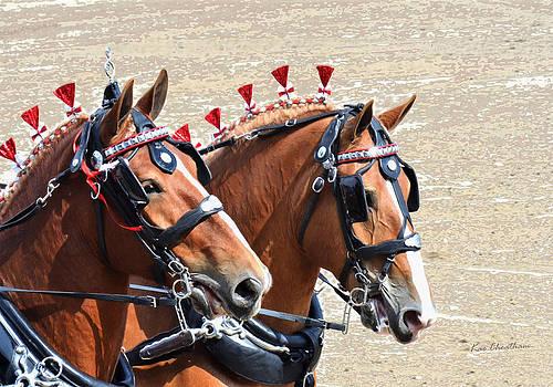 Kae Cheatham - Draft Horses at Show