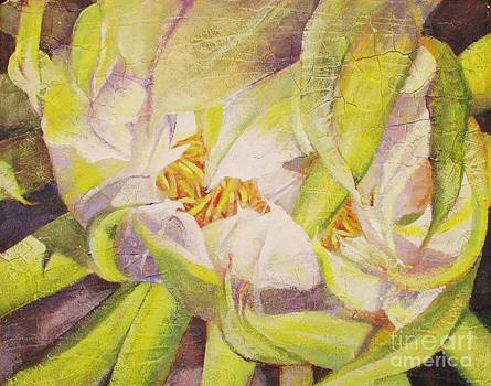 Dragon Fruit Cactus Blossom by Beth Fischer