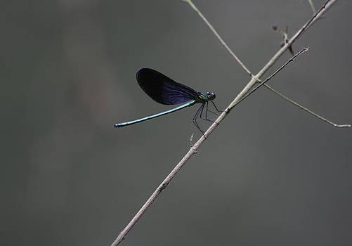 Qing  - Dragon on a Stick