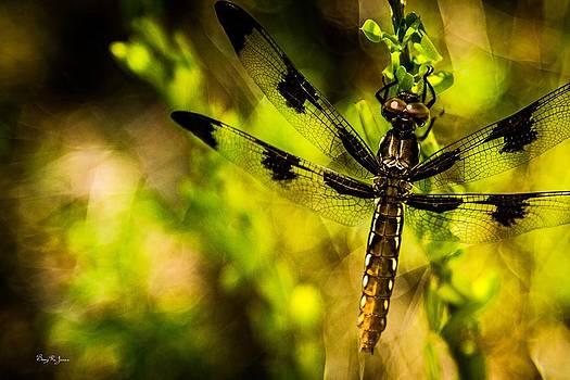 Barry Jones - Dragonfly - Dragon Waiting