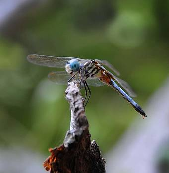 Dragonfly 02 by Leon Hollins III