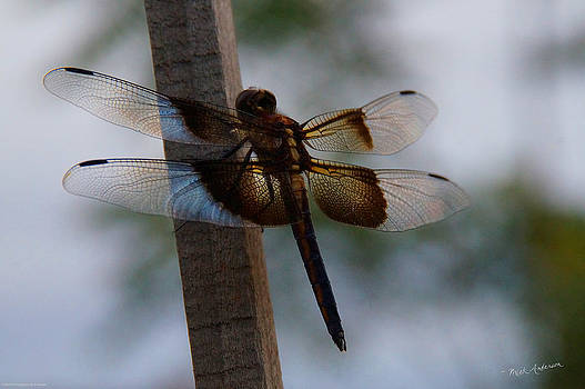 Mick Anderson - Dragonfly at Rest