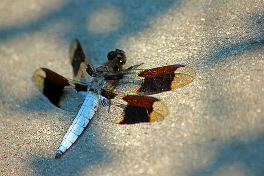 Carolyn Stagger Cokley - Dragonfly
