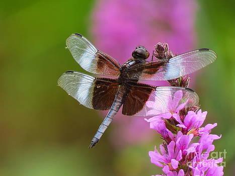 Dragonfly by David Lankton
