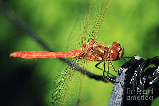 LHJB Photography - Dragonfly