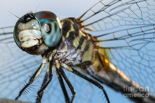 Dragonfly by Michelle Burkhardt