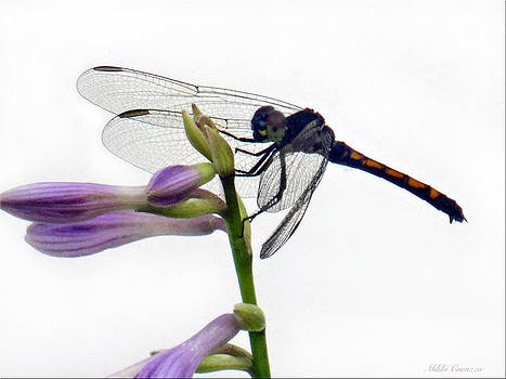 Dragonfly by Mikki Cucuzzo