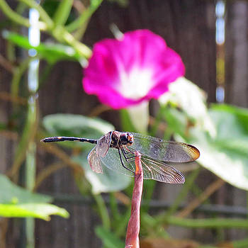 Dragonfly on Watch by Walter Klockers