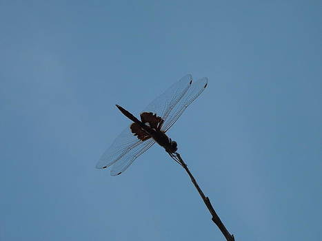 Dragonfly by Rebecca Cearley
