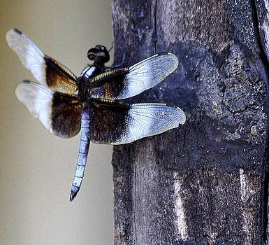 Dragonfly by SW Johnson