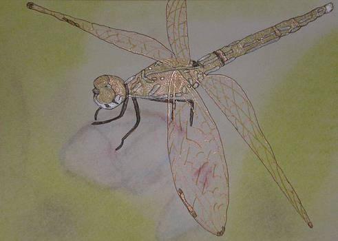 Marcia Weller-Wenbert - Dragonfly Visitor