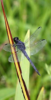 Carolyn Stagger Cokley - Dragonfly9233